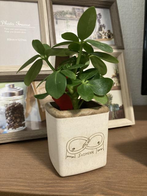 締め会 植木鉢