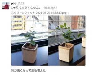 植物の成長 (1)